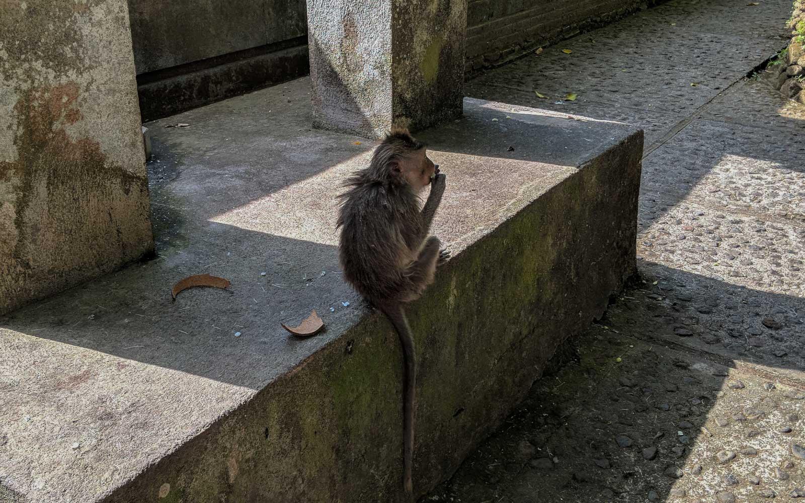 Ubud Monkey Forest: Wildlife in the City