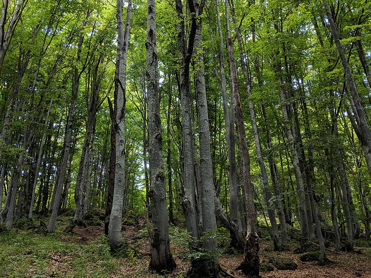 Wooded area on Vitosha Mountain Hike