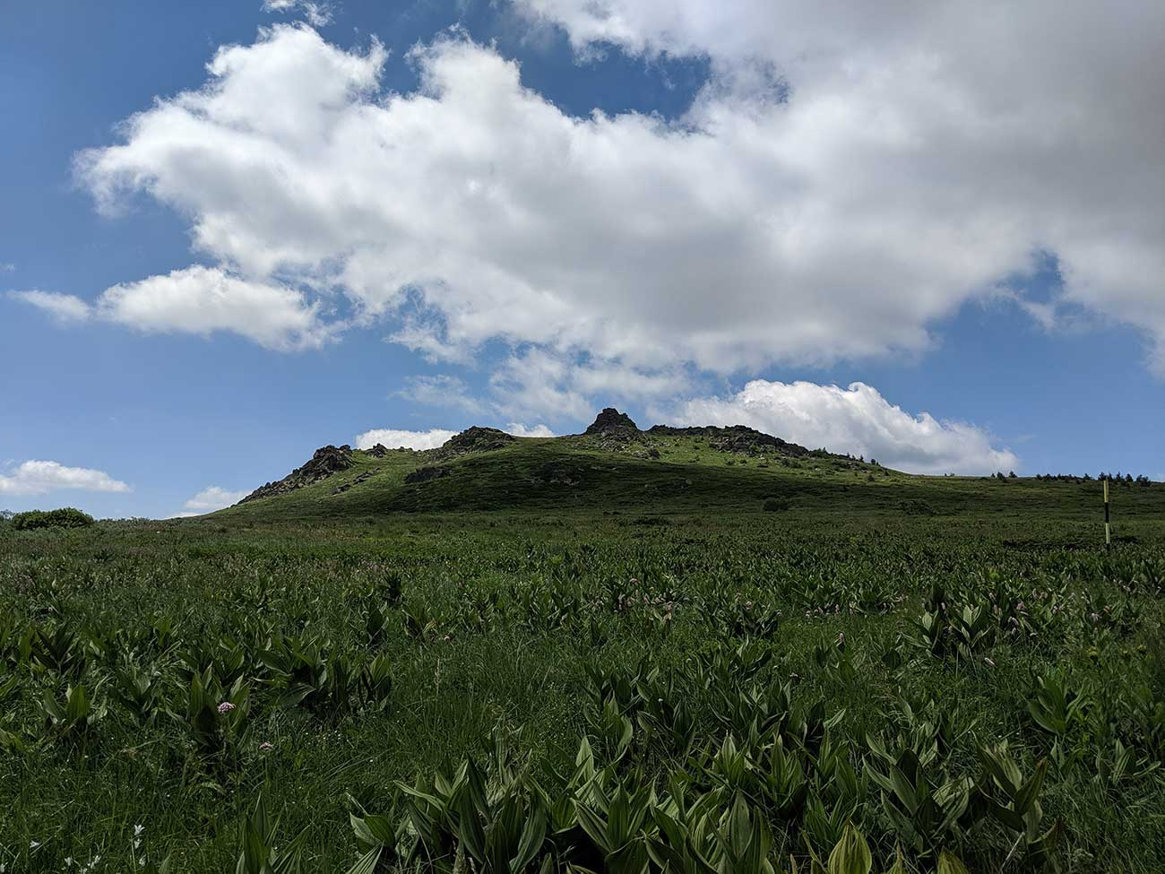 Pretty field and mountain top on Vitosha Mountain in Bulgaria